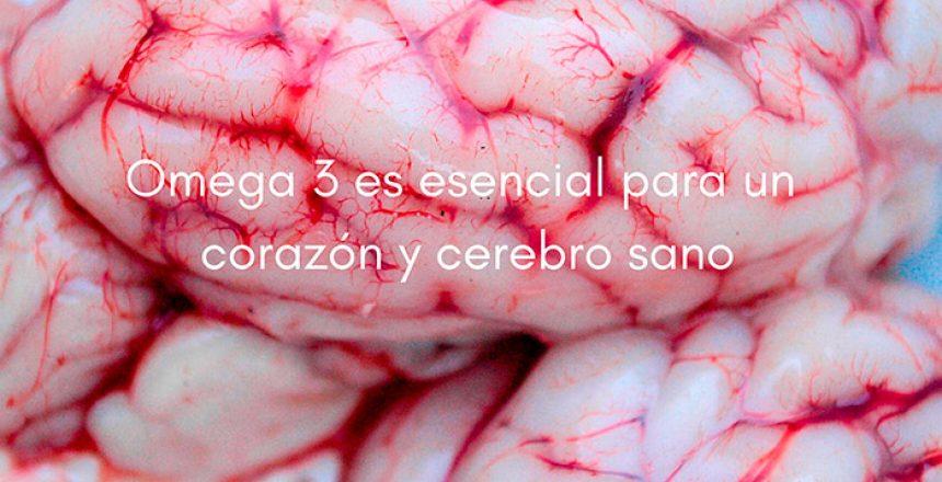 Omega 3: Corazón y cerebro sano